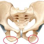 bum bones
