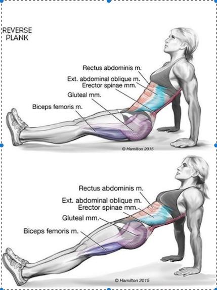 Plank Pose Benefits Innovative Wellness Waterloo Yoga